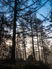 0172 (28) - Morning mist in Athol Woods
