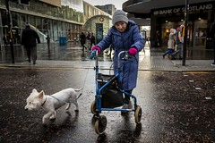 Companion (Leanne Boulton) Tags: urban street candid portrait portraiture streetphotography candidstreetphotography candidportrait streetportrait eyecontact candideyecontact streetlife sociallandscape old elderly woman female lady eyes face expression mood emotion happy happiness crossing walking pink blue coat hat cold winter reflection wet weather dog pooch pet animal walkingframe tone texture detail depthoffield bokeh naturallight outdoor light shade city scene human life living humanity society culture lifestyle people canon canon5dmkiii 24mm wideangle ef2470mmf28liiusm colour glasgow scotland uk