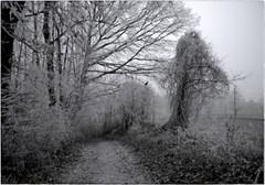 ...Winter der Nebel... (shallowcreek) Tags: winter nebel fog raureif hoarfrost baum tree wald forest weg walk natur nature landscape landschaft photoshop
