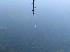 IMG_5852 (jesust793) Tags: luna moon agua water reflejo