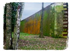 (Jean-Luc Léopoldi) Tags: murs mousse arbres hiver pierres fortifications
