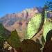 Cactus on a mountain