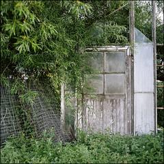 Greenhouses - Kodak Porta 160 (magnus.joensson) Tags: phototrip01 sweden swedish skåne summer july rolleiflex carl zeiss tessar 75mm kodak porta 160 6x6 medium format c41 greenhouse
