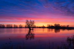 Kleurrijke zonsopkomst part II (nldazuu.com) Tags: zonsopkomst natuur sunrise gelderlad boom kleurrijkhuissen grotebloem kleurrijk huissen kolk colourfull landschap nldazuufotografeertcom davezuuring lingewaard landscape kleuren gelderland