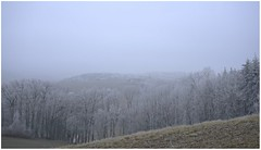 ...somber... (shallowcreek) Tags: winter nebel fog raureif hoarfrost baum tree wald forest natur nature landscape landschaft austria