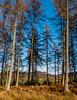 0172 (41)- Athol Woods