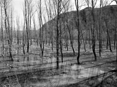 Campo anegado (sherca) Tags: graus huesca reflejos agua árboles