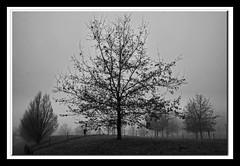 Inverno 2019 (claudiobertolesi) Tags: bw alberi blackwhite europe albero biancoenero claudiobertolesi claudiobertolesiphotos fotoclaudiobertolesi fotografiaclaudiobertolesi bertolesiclaudiophotos italy parco nature landscape europa italia sony natura lombardia paesaggio parchi orizzonte orizzonti sonyilce3000 2020