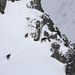 Herd of chamois grazing in high altitudes of High Tatras