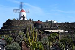 Jardin de cactus, Lanzarote, Islas Canarias, Spain, Nikon_D810, January_2020_123 (tango-) Tags: lanzarote islascanarias canarie canaryislands 加那利群島 جزرالكناري kanarischeinseln