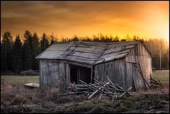 Last photo of the barn (Jonas Thomén) Tags: barn lada stall stable decay förfall sunrise soluppgång ruin field åker skog woods forest grass gräs hdr