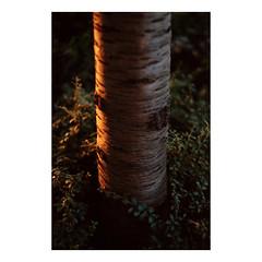 (Dennis Schnieber) Tags: fujica st801 fujinon 50mm f14 kodak portra 160 colour analogue film 35mm berlin marzahn