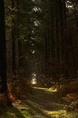 L'allée ensoleillé (Johan (dreamearth 85)) Tags: nature natuur forest forêt bos soleil sun zon allée alley oprit forestière hiver winter vendée nikon d7000 paysdelaloire saintmartindesnoyers forêtdudétroit tamron 70300