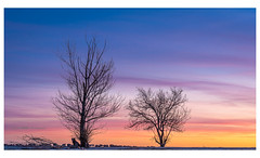 Trees in winter (Ignacio Ferre) Tags: tree árbol madrid españa spain sunset puestadesol anochecer landscape paisaje nikon naturaleza nature winter invierno outside nikkor light luz