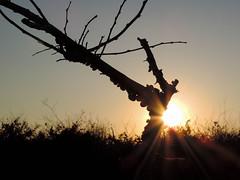 Sol de invierno (Nacho LLoréns) Tags: atardecer naturalezamuerta árbol paisaje caracoles