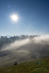 7R404797_s (AndiP66) Tags: sonyfe24105mmf4 emmental valley winter frost hoarfrost sun sonne morgen morning bauernhof farmhouse strasse road schweiz switzerland sony sonyalpha 7rmarkiv 7riv 7rm4 a7riv alpha ilce7rm4 sonyfe24105mmf4goss sony24105mm 24105mm emount sel24105g andreaspeters