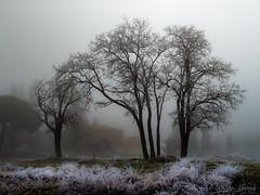 Tras la ermita. (Roberto_48) Tags: arandadeduero cencellada dia paisaje ngc ermita virgen viñas virgendelasviñas niebla