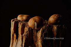 Mushrooms, still life (Tulpaloose) Tags: stilllife mushrooms foodphotography strobes