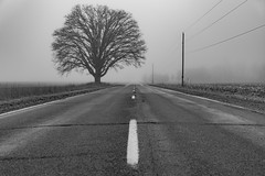 Are You Ready for the Country? (matthewkaz) Tags: road tree trees fog mist weather powerlines bw blackandwhite inghamcounty michigan winter meridian meridianrd rural farm field 2019