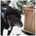 snow (Bordadorhund) Tags: