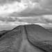 Las Trampas Regional Wilderness, Contra Costa County, California (1AndrewAldrich) Tags: ebparksok lastrampas