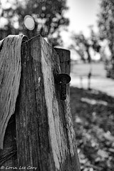 Old Ranch Fence (lorinleecary) Tags: trees cambriaandnear fence bokeh barbedwire oldranchfence