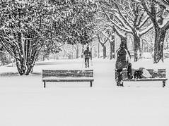 youpi, il neige! (photosgabrielle) Tags: photosgabrielle urbain ski neige hiver snow winter urban people skieur montreal montrealbw bw noiretblanc streetphotography bwphotography