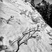 Under glass (D. Inscho) Tags: monochrome pacificnorthwest washington northcascades blueberry depthoffield snow ice