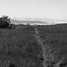 MacKerricher field and path B&W - Explored (eschweik) Tags: mendocino ca california field path bw black white mac kerricher mackerricher state park