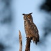 GREAT HORNED OWL - Take a look at those feet, serious weapons, a long shot in low light at Circle B Bar Reserve, Lakeland, Florida (EXPLORE) (Ed Rizer) Tags: