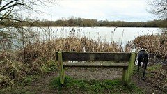 Evie enjoying the smells (not view) (eucharisto deo) Tags: watermead park leicester river soar empty bench view lake evie dog