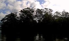 Los árboles y su reflejo. Humedal Nacional Térraba-Sierpe/ The trees and their reflection, Térraba-Sierpe national wetland (vantcj1) Tags: àrboles manglar humedal pantano islote isla reflejo viaje paseo bote barco navegación cielo nubes silueta agua
