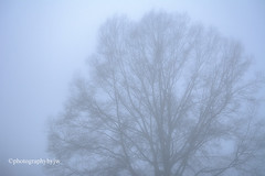 Lost in Fog (Photographybyjw) Tags: lost fog tree is about disappear this early morning north carolina ©photographybyjw shot foggy rural country