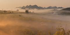_MG_8262-64.3.0212.Tân Lập.Mộc Châu.Sơn La (hoanglongphoto) Tags: asia asian vietnam northvietnam northernvietnam northwestvietnam landscape scenery vietnamlandscape vietnamscenery mocchaulandscape nature naturelandscape sunrise clouds mountain flanksmountain vietnammountainouslandscape cloudsofmocchau canon canoneos5dmarkii tâybắc sơnla mộcchâu tânlập thiênnhiên thiênnhiênmộcchâu natureinmocchau bìnhminh mây mâymộcchâu núi sườnnúi phongcảnhvùngnúi topmountain dãynúi đỉnhnúi mâyluồnmộcchâu forest theforest rừng hoanglongphoto bìnhminhmộcchâu canonef24105mmf4lisusm hoamậnmộcchâu 1x2 earlyfrost earlymorningfog fog mist fogofmocchau sươngsớmmộcchâu sươngmùmộcchâu