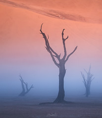 Flanked (Hilton Chen) Tags: camelthorntrees deadvlei foggy landscape misty namibdesert namibnaukluftnationalpark namibia sanddunes silhouettes sossusvlei sunrise