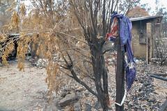 Sarsfield destruction 2020-14 (Peter_Mackey) Tags: bushfire australia victoria eastgippsland