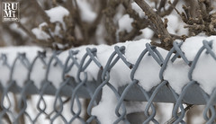 Winter in Niagara (rumimume) Tags: rumimume 2019 niagara ontario canada photo canon 80d snow ice winter cold fence snowday outdoor
