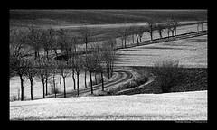 (herbert thomas hesse) Tags: kurve landstrasse weg bäume allee felder landschaft eichsfeld hth sw monochrome flächen graustufen bw