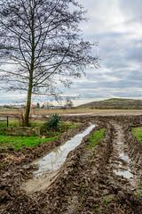 groovy scene (stevefge) Tags: winter beuningen 2020 trees rural bomen fields gelderland nature water netherlands reflections landscape nikon mud nederland natuur nl modder reflectyourworld