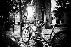 Bicycle (Missing Pictures) Tags: photoshot shot eu europe park margitisland budapest hungary travel traveling sunshine sunset summer sun moon white black blackandwhite monochrome bike bicycle