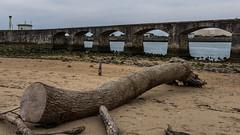 L'Adour (Ivan van Nek) Tags: france frankrijk frankreich pyrénéesatlantiques nikond7200 d7200 sigma1770 2019 adour avenuedeladour anglet seaside log boomstam bridge