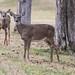 Dear deer, don't fear