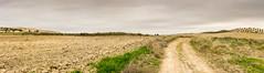 CAMPOS DE LA MESETA (bacasr) Tags: camino way trail panorama campos caminando cloudy hiking fields villaconejos madrid comunidaddemadrid panoramica senderismo nuboso