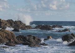Wild sea (♥ Annieta ) Tags: annieta januari 2020 holiday vakantie vacances france frankrijk cotedazur laseynesurmer fabregas rots rock kust coast zee sea mer golf wave allrightsreserved usingthispicturewithoutpermissionisillegal water middellandsezee mediterannée