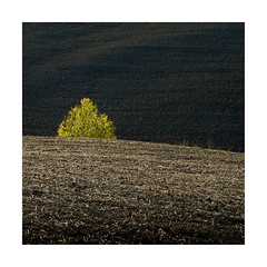 Hidden ! (Nick green2012) Tags: minimal colour landscape tree square silence