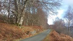 The road to the Isles, Tomdoun, Dec 2019 (allanmaciver) Tags: tomdoun autumn late winter bronze trees road isles original roadside allanmaciver