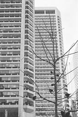 Downtown Federal Buildings (Taomeister) Tags: leicam6ttl summicronm50mmf2v ilfordhp5 philadelphia asa800