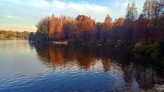Emmarentia_Dam_in_Autumn