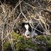 Where i am? (Franck-Balay) Tags: bordercollie dog companion nature forest tree franck balay france ardèche