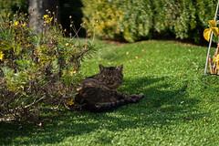 Sleeping (fedech_) Tags: sony sonyalpha sonya7 cat winter outside nature animals beauty bellezza zeiss zeisscameralenses batis85